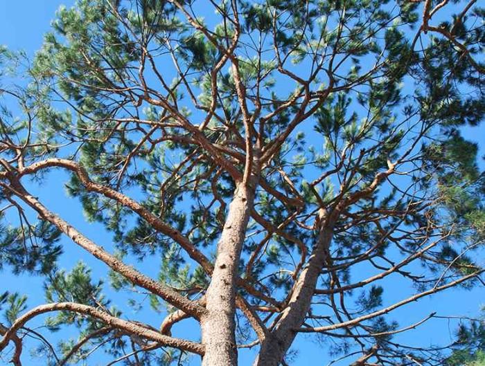 Manutenzione giardino - potatura alberi